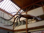 Seattle giant squid dsc04499.jpg